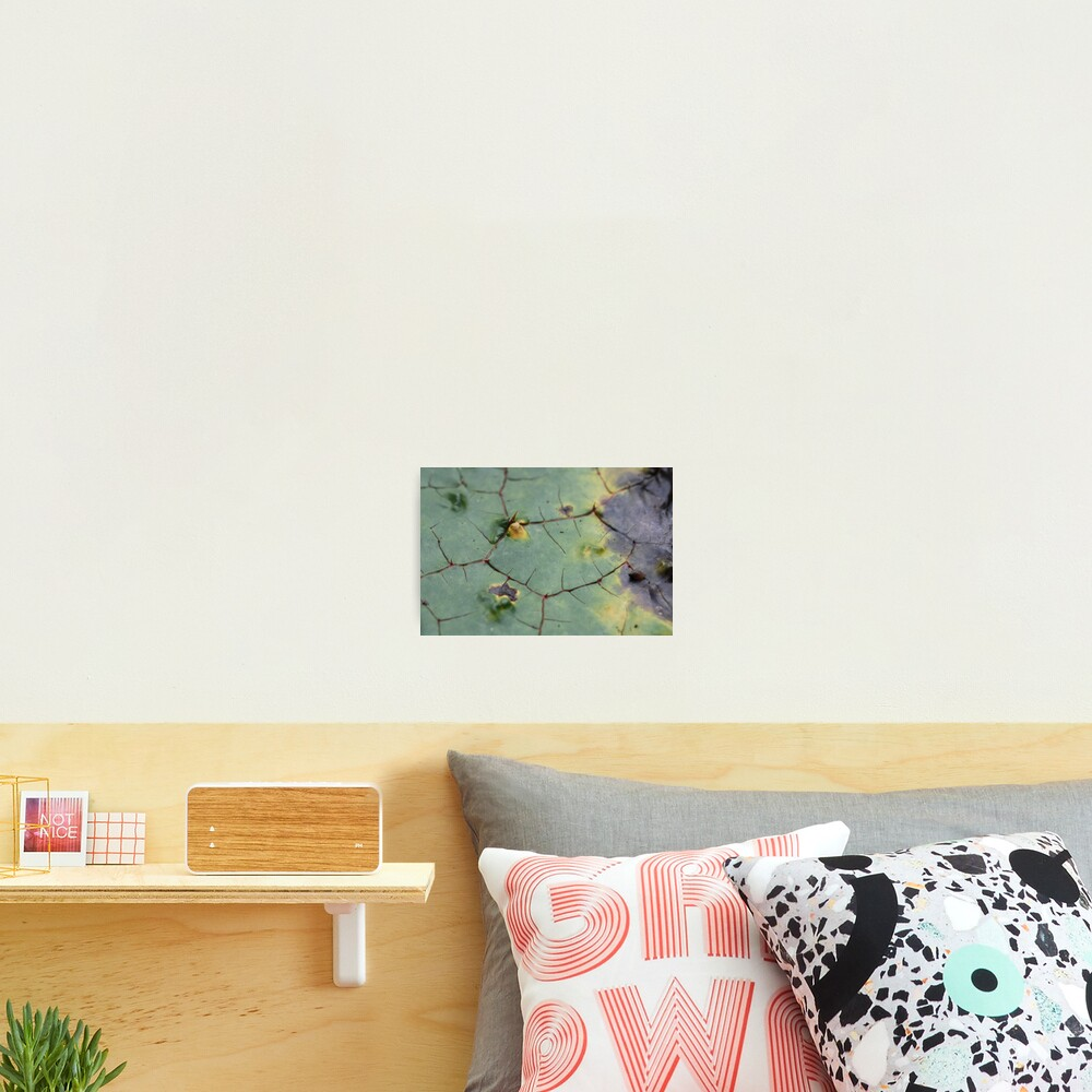 drifted leaf Photographic Print