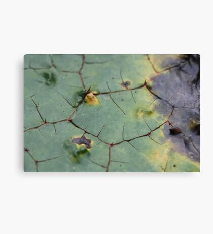 drifted leaf Canvas Print