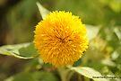 Sunshine Yellow: to Chase the Blues Away by DonDavisUK
