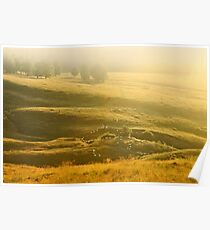 Herd of sheeps on the sunset hill. Poster