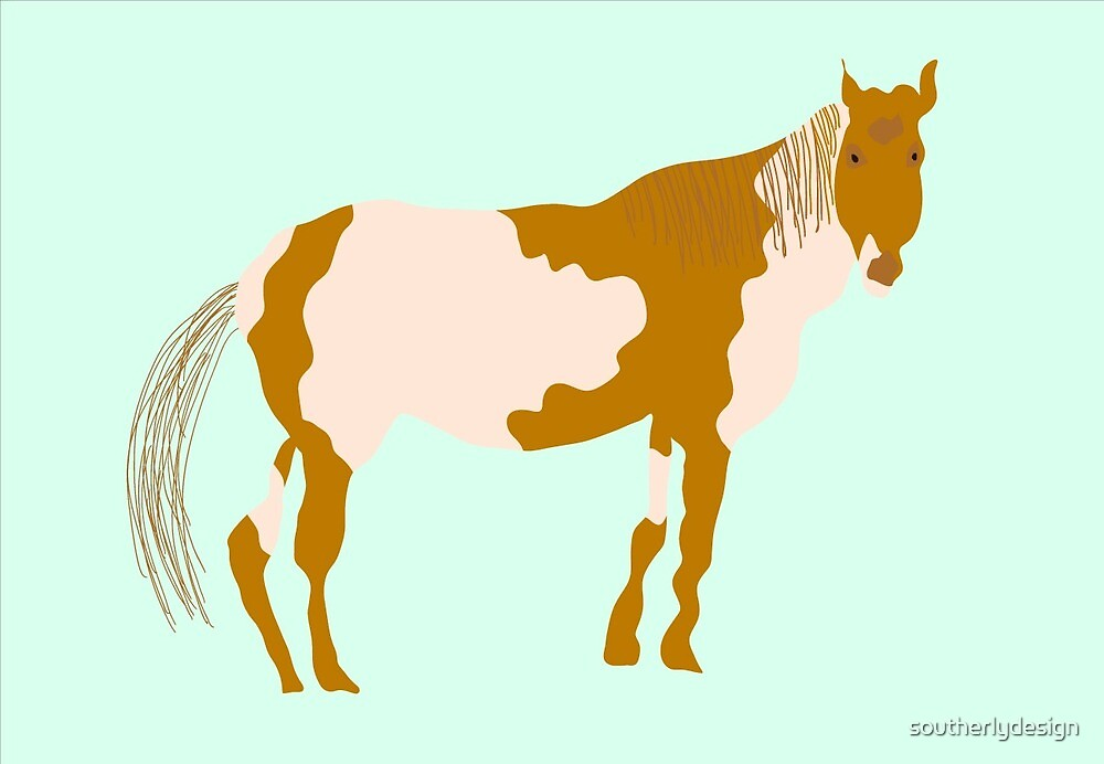 Appaloosa Horse by southerlydesign