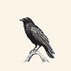 Raven M by Dan Tabata