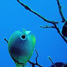 Angel Fish by colourfreestyle