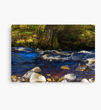River Cover Canvas Print