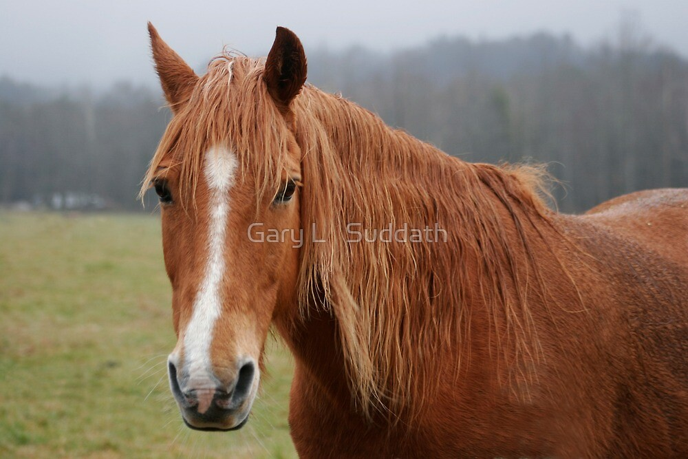 Horse by Gary L   Suddath