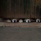 Huskies Under the Wooden Door by vrphotographysa