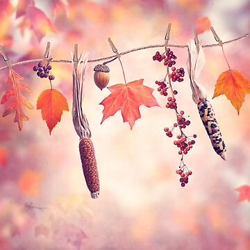 Autumn composition on colorful leaves background by svetlanna