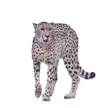 Digital painting of cheetah isolated on white background by svetlanna