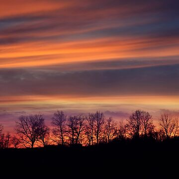 tree silhouettes agains a colorful sunset by svetlanna