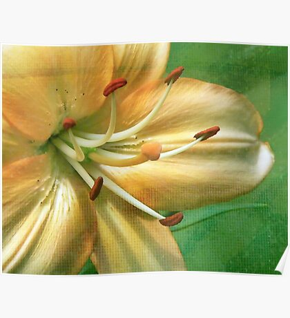 Day Lily in Texture Poster