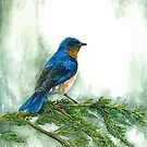 Bluebird by André Vaillant