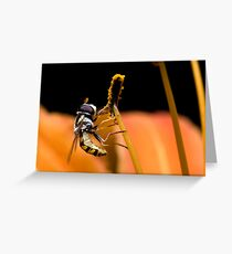 Hoverfly eating pollen of lily Greeting Card