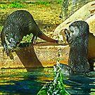 Otters Splash by miroslava