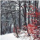 Winter Day by Dirk Wuestenhagen