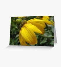 Desirable Daisy Greeting Card