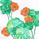 Nasturtiums by Elizabeth Kendall