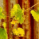 I am the Vine by Marilyn Cornwell