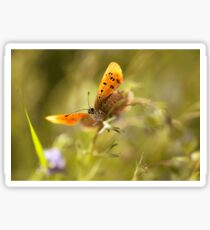 Morning impression with orange butterfly Sticker
