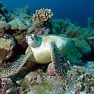 Meeresschildkröte | Rast im Korallenriff von Ute Niemann