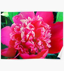 Sarah Bernhardt - Double Bloom Poster