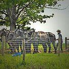 Amish Farmer by Dyle Warren