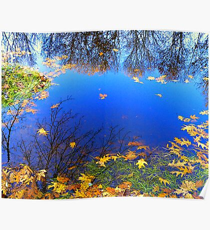 Golden Pond Reflections Poster