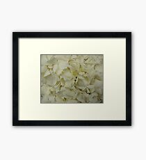 White Hydrangea-(Floral Macro) Framed Print