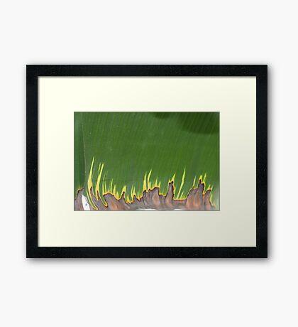 burning leaf Framed Print