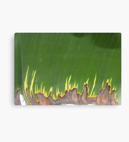 burning leaf Canvas Print