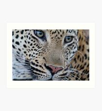 Leopard close up Art Print