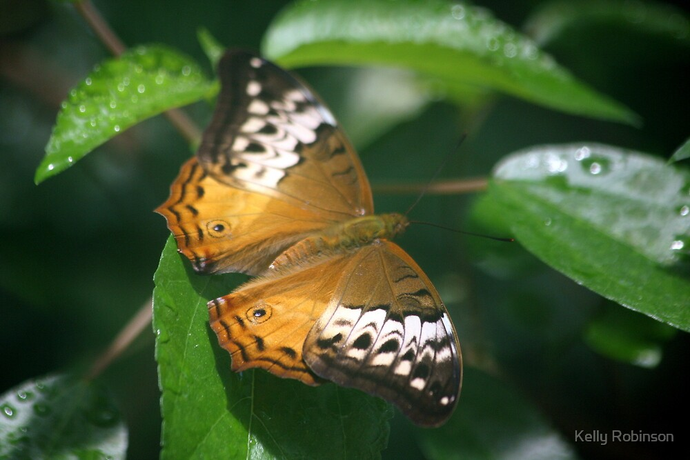 One Orange Lacewing Butterfly by Kelly Robinson