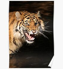 Tiger: Annoyance Poster
