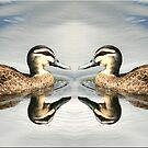 Duck a la Panorama by Kym Howard