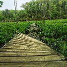 Warped path through swampland. by Angela Ferguson