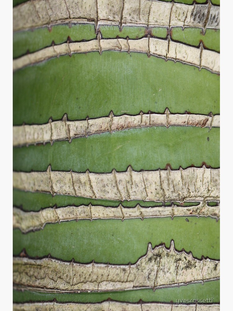 Green lines by yvesrossetti