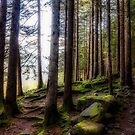 Bright forest by Roberto Pagani