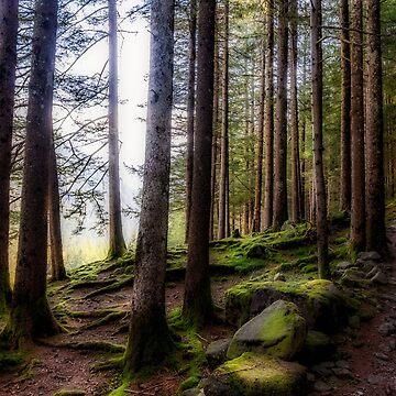Bright forest by birba