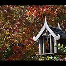 The Color of Fall by DavidWayne