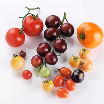 Variety of Organic heirloom tomatoes of different sizes and colors isolated on white art photo print by AwenArtPrints