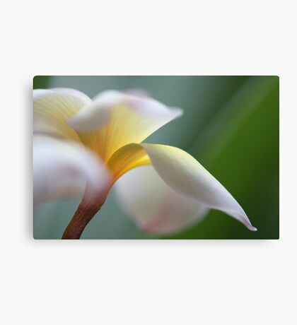 windy flower Canvas Print