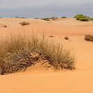 Red Sand 15 by Werner Padarin