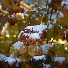 Leaves Snow by MikeDAdams