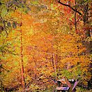 Autumn Magic by FrankieCat