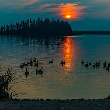 Evening Swim by PhotosbySylvia