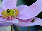 Beauty in Flowers! by Gabrielle  Lees