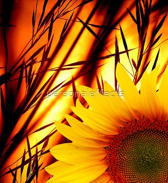 Sunset & sunflower by personaleffects