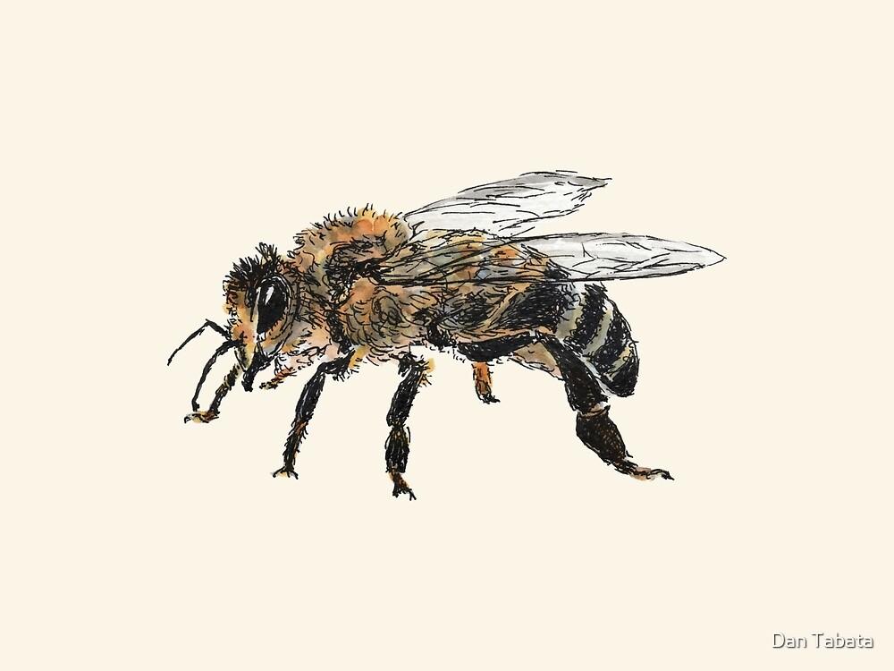 Honey Bee by Dan Tabata