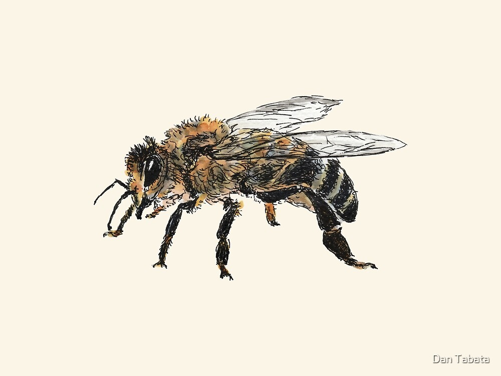 Honigbiene von Dan Tabata