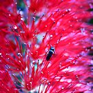 Little Bug On Bokeh by TomRaven