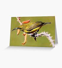 """Sunbird"" Greeting Card"